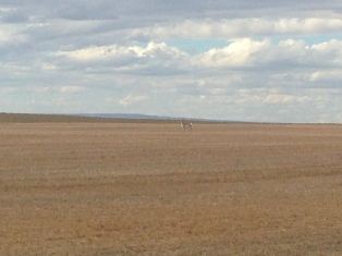 Antelope in the distance